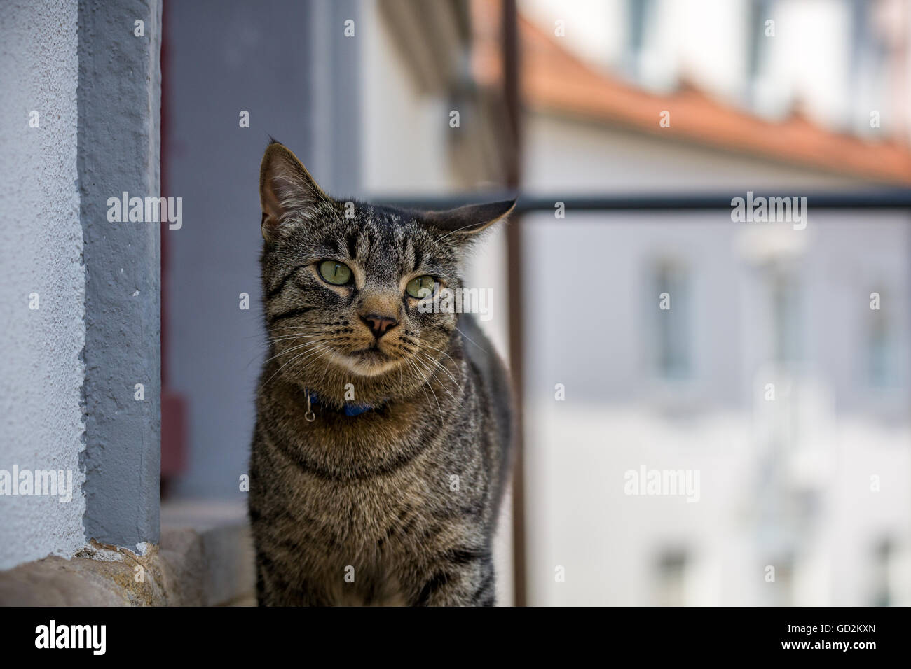 Pet cat on the streets - Stock Image