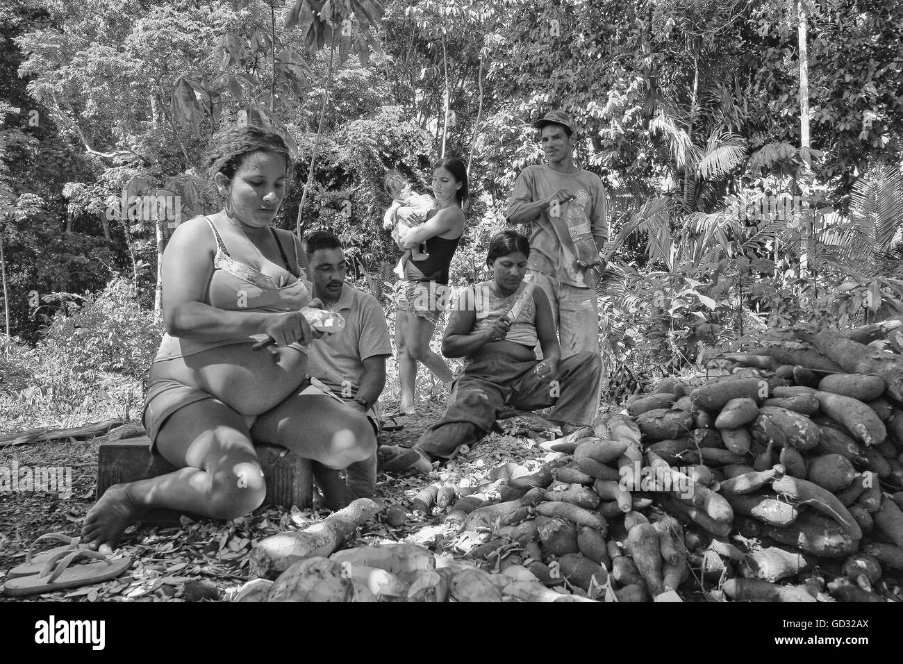 Black and white picture of indigenous people peeling cassava roots to proccess, remove cyanide and prepare for cooking. - Stock Image