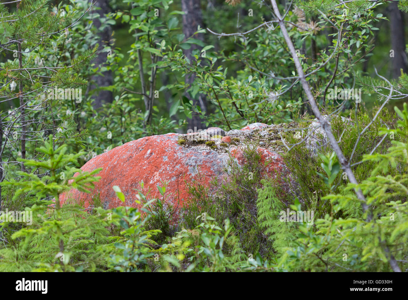 Red rock in northern Sweden - Stock Image