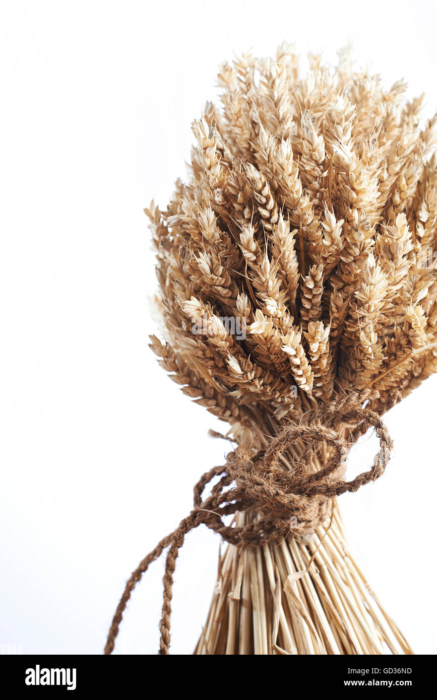 Close Up Of Wheat Tied With String - Stock Image