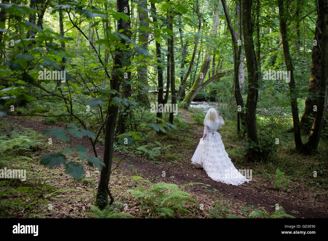 A young blonde woman girl wearing an old-fashioned white wedding dress frock walking alone  in a woodland on a summer Stock Photo