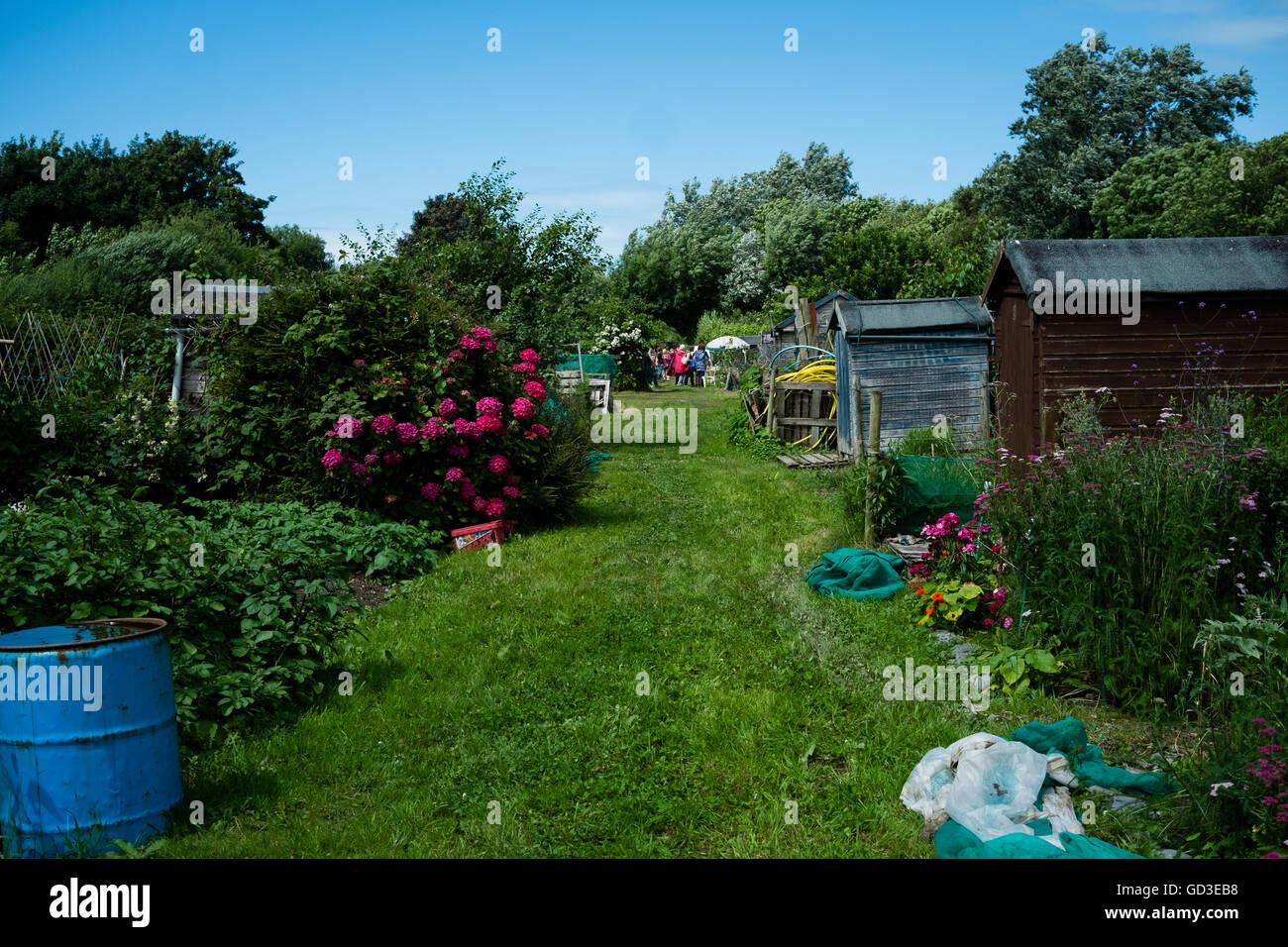 aberystwyth allotment gardens on open garden day sunday 10 july 2016