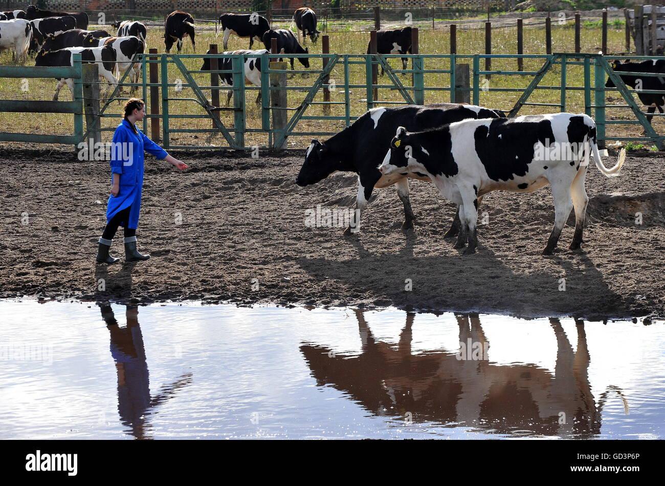 Belarus, Brest Region. 11th July, 2016. Tatiana Budnik, a student of Vitebsk State Academy of Veterinary Medicine, - Stock Image