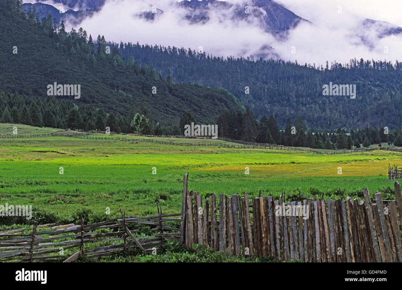 Fenced field - Stock Image