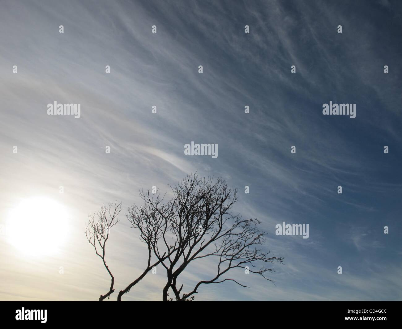Tree meets fluffy clouds. - Stock Image