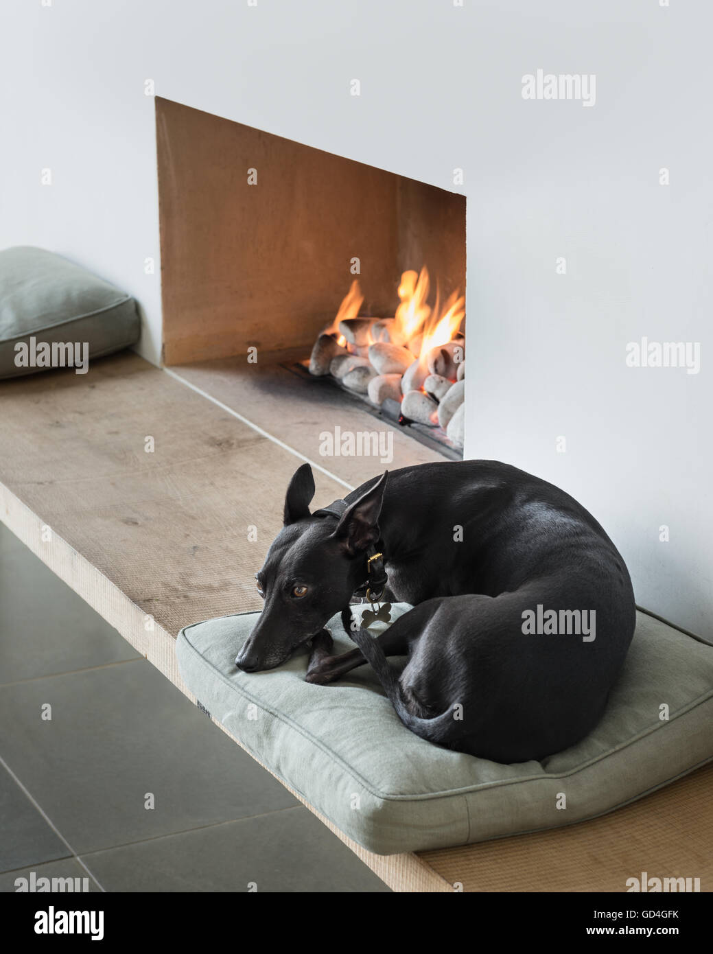 Whippet sleeps curled up at lit fireside - Stock Image
