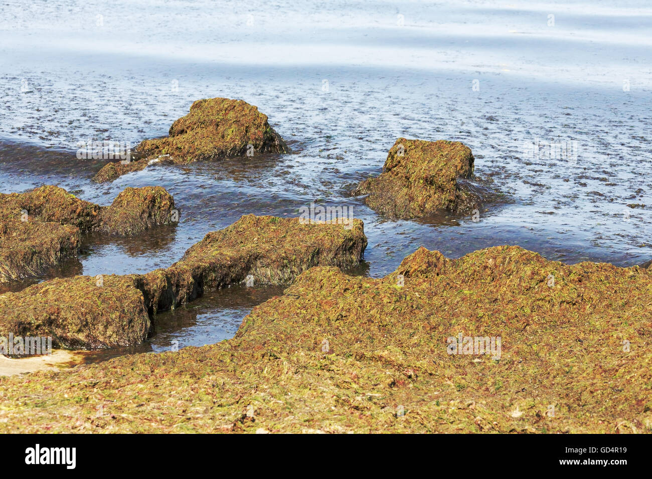 Amazing landscape formed by a seaweeds - Stock Image