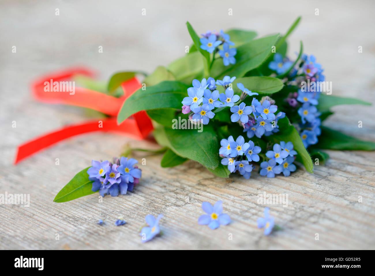 Forgetmenot / (Myosotis spec.) Stock Photo