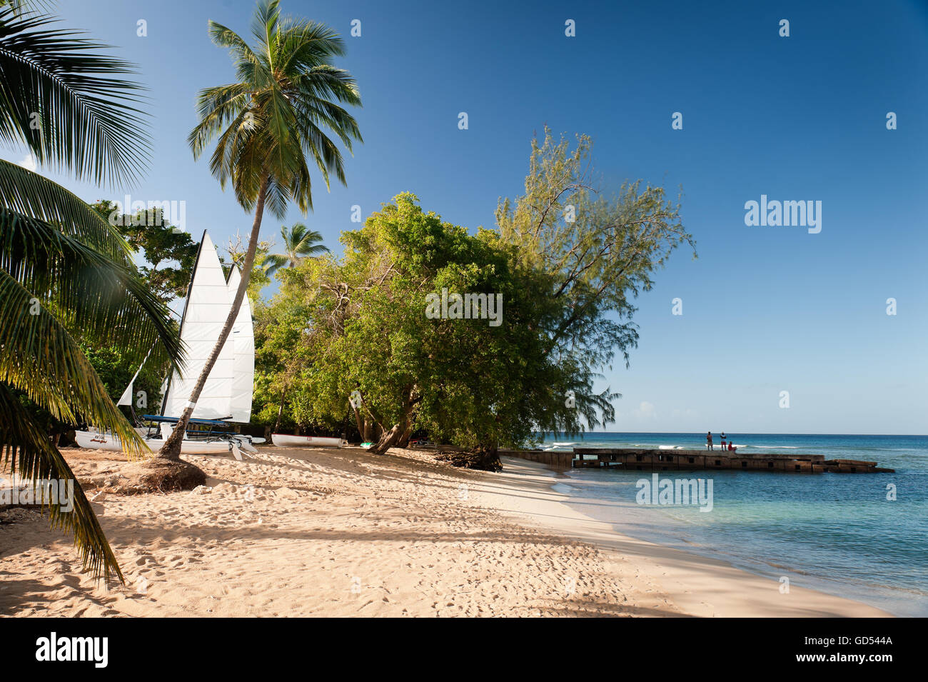 Catamaran under palm tree on beach in Barbados, West Indies - Stock Image