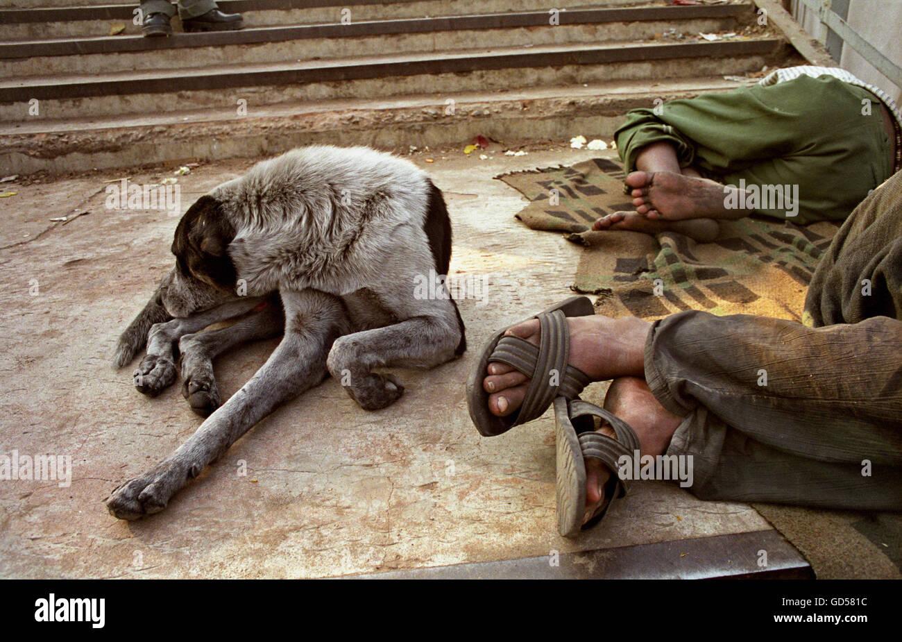 Dog sleeping besides men - Stock Image