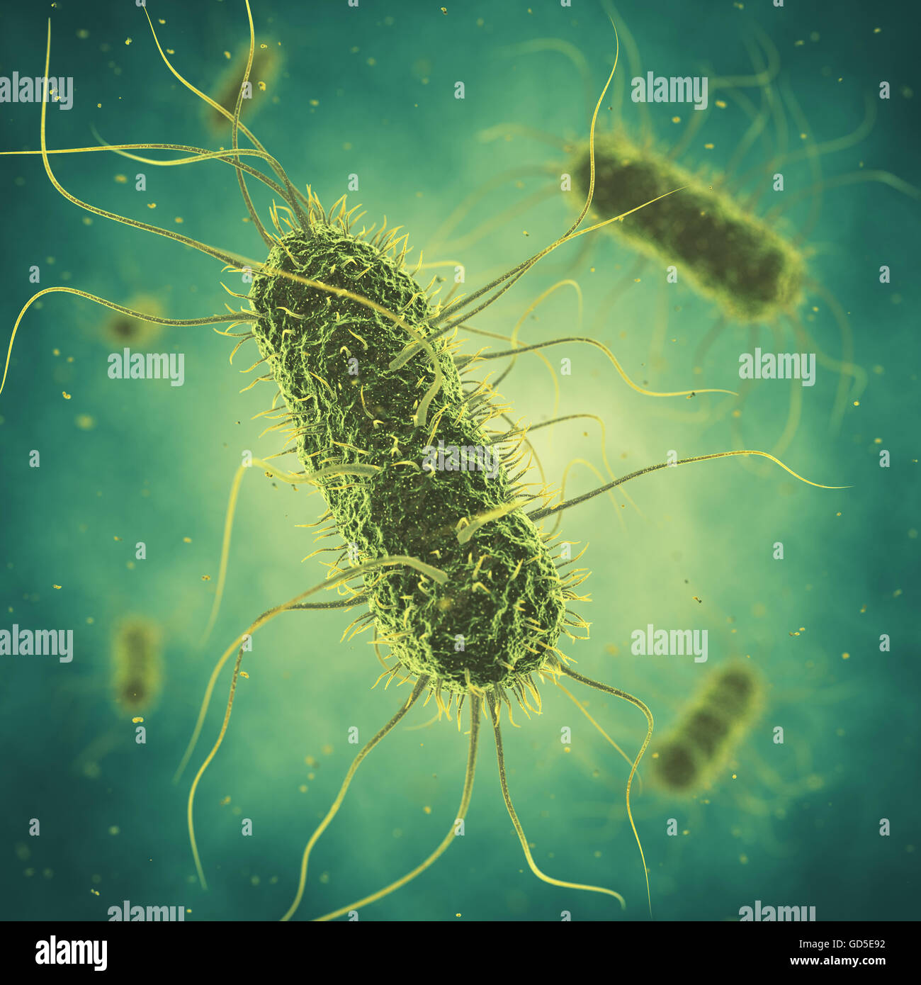 Salmonella bacteria , Germ infection , Epidemic bacterial disease - Stock Image