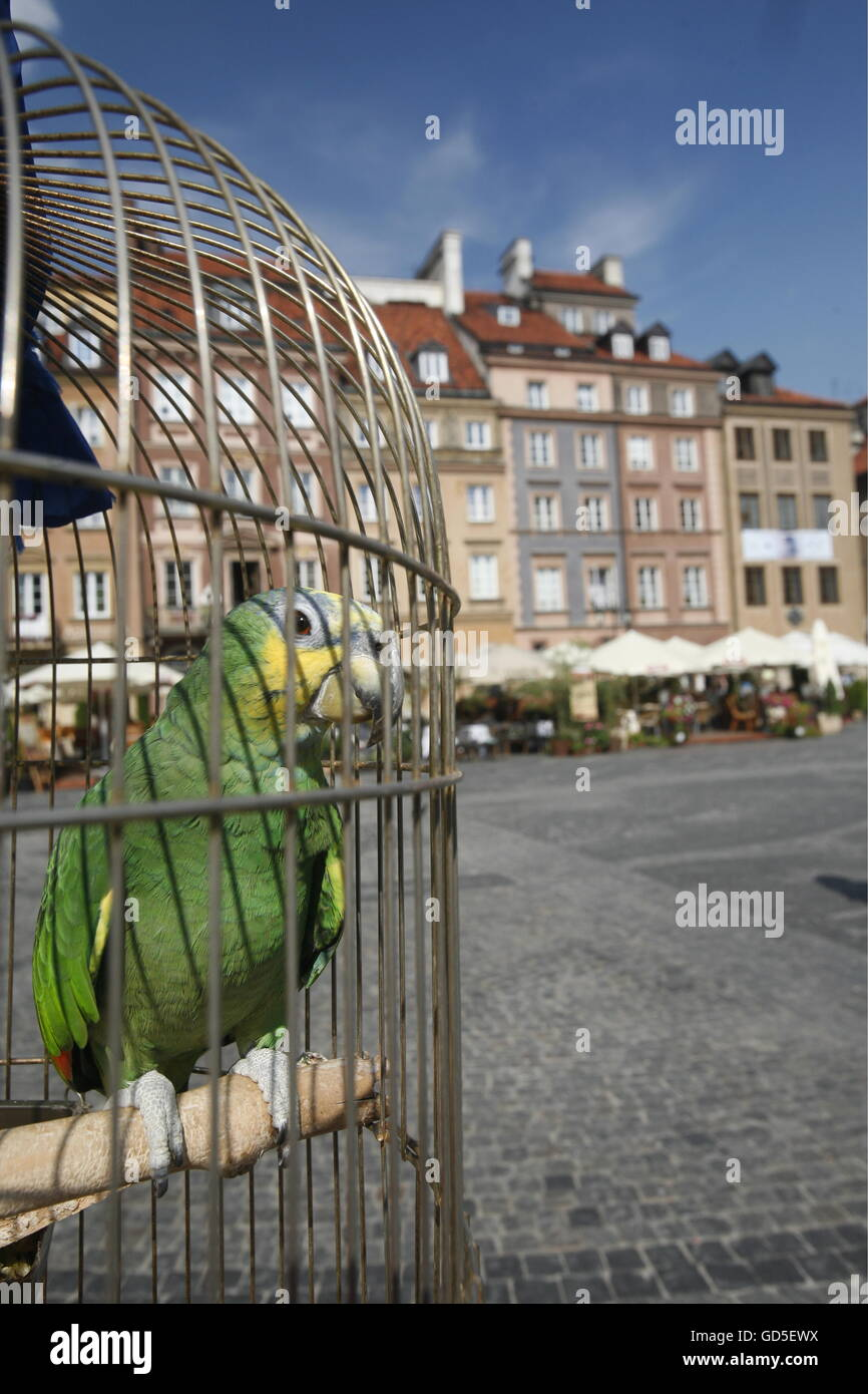 the marketsquare the old town in the City of Warsaw in Poland, East Europe. - Stock Image