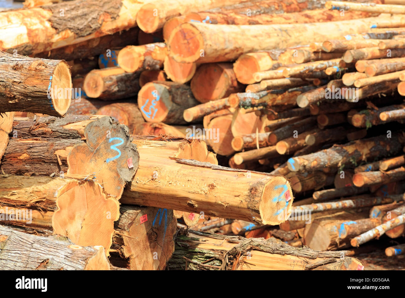 Logs at sawmill, Ladysmith, Vancouver Island, British Columbia - Stock Image