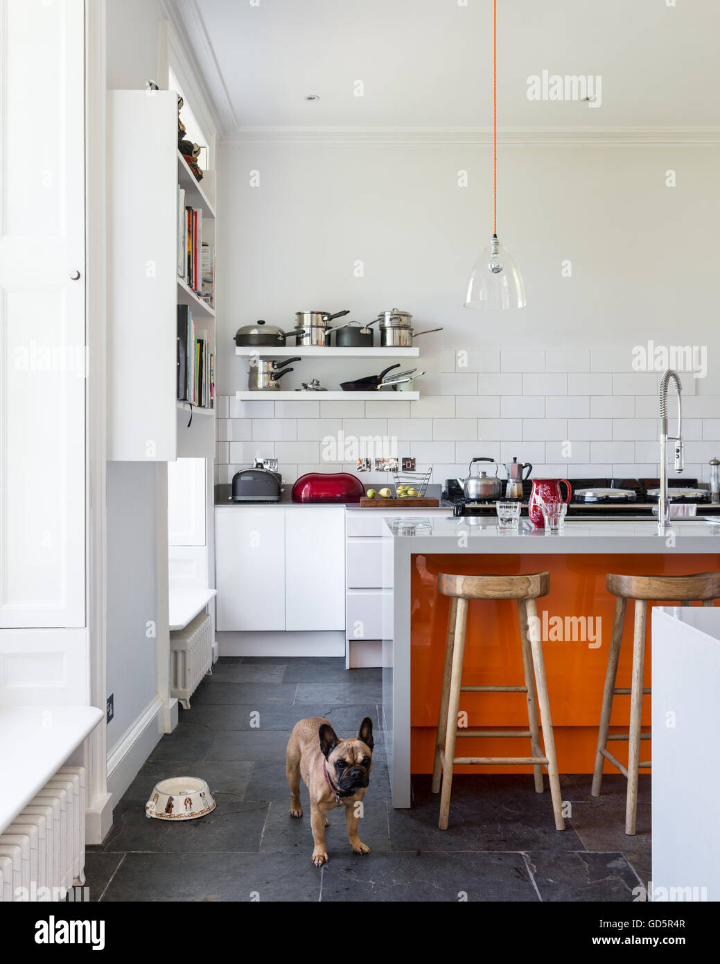 French bulldog in high ceilinged kitchen with white metro tiles and grey riven slate floor. - Stock Image