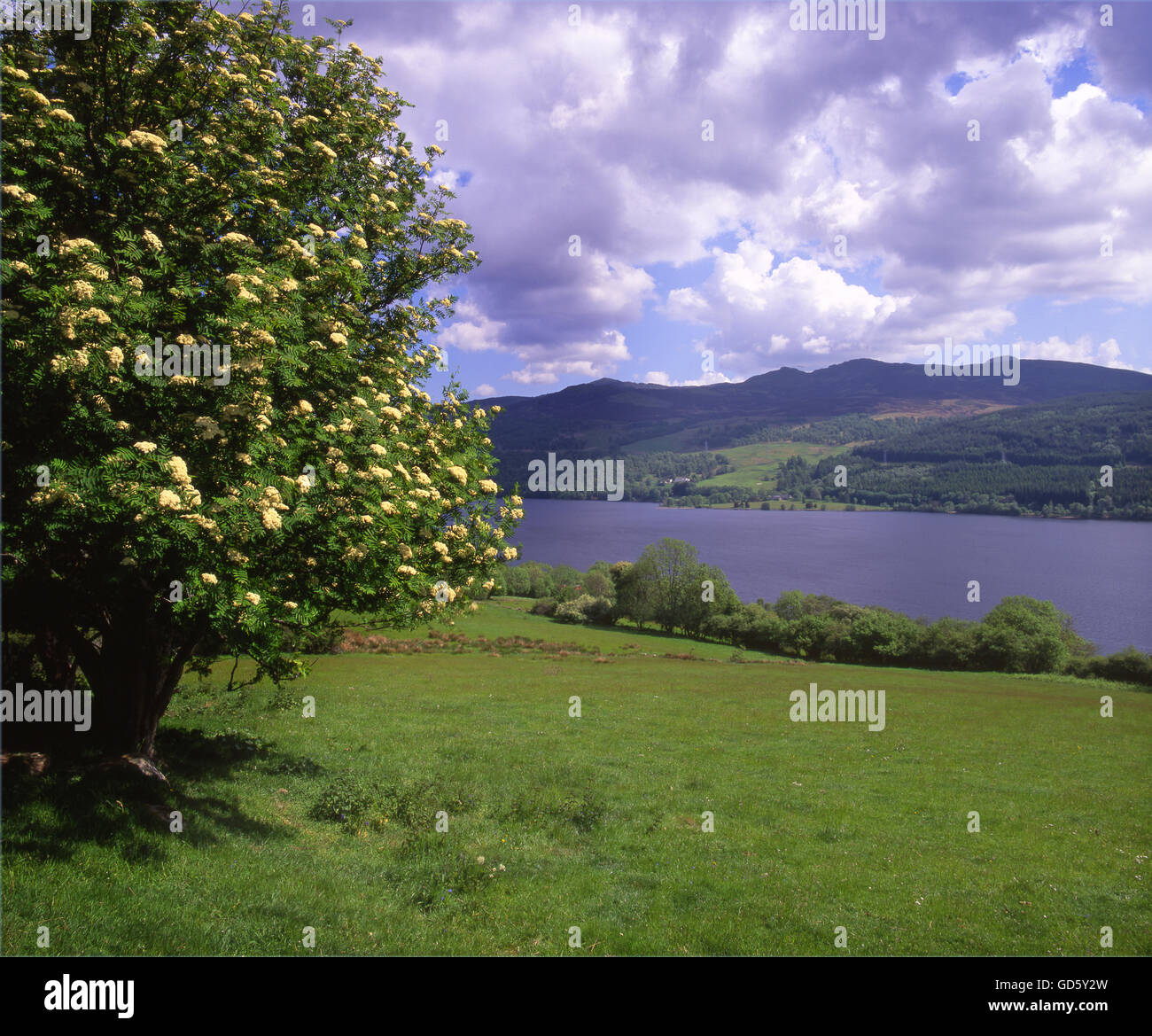 summer view of loch Tummel, Perthshire. - Stock Image