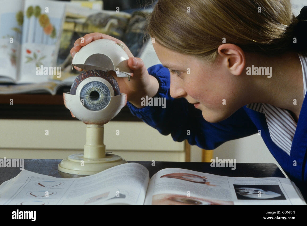 A school students looking at a model of a human eye. England. UK - Stock Image