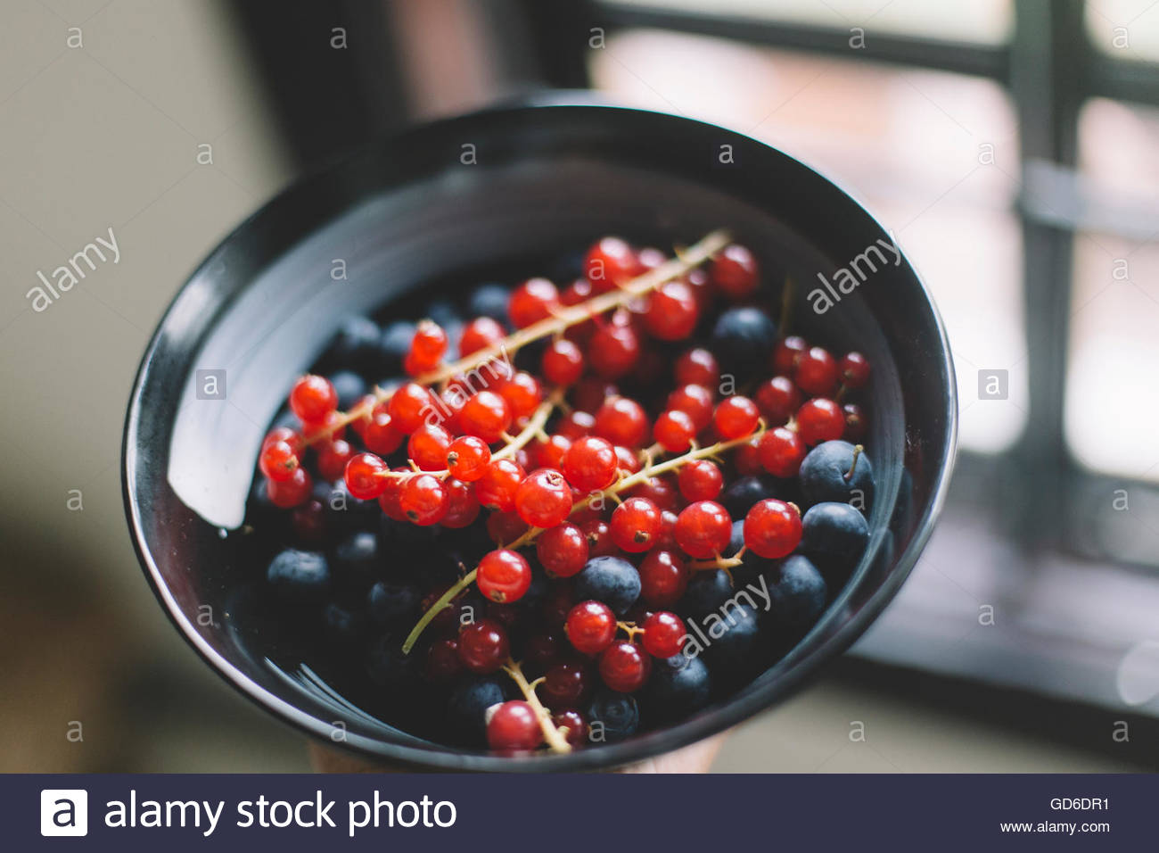 Cranberries and blueberries in a black  Bowl on neutral background - Stock Image