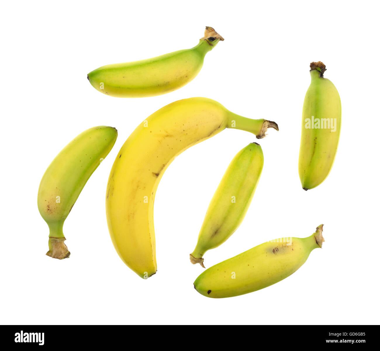 Five Photographs Of Banana In Seach Of >> A Group Of Five Small Bananas Surrounding A Regular Size Banana
