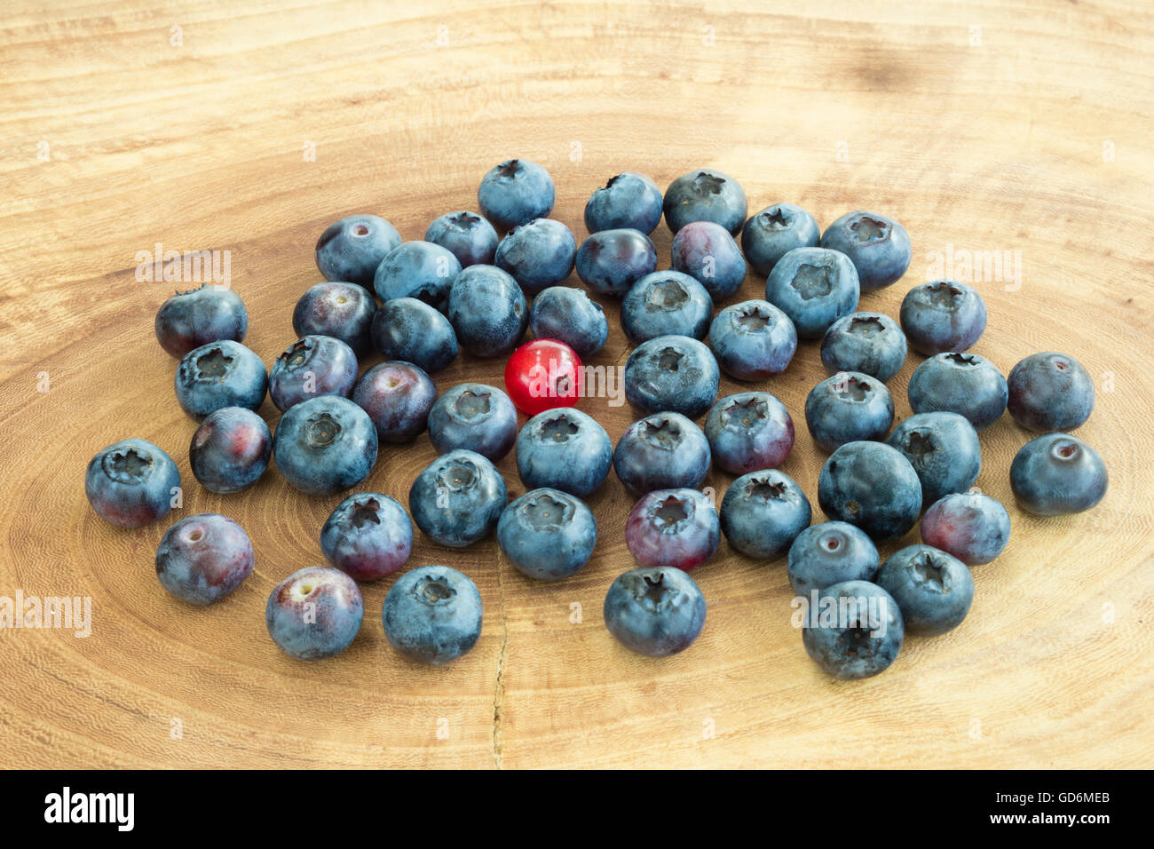 Group of dark blue bilberries and , in the middle, a red currant standing in the middle. - Stock Image