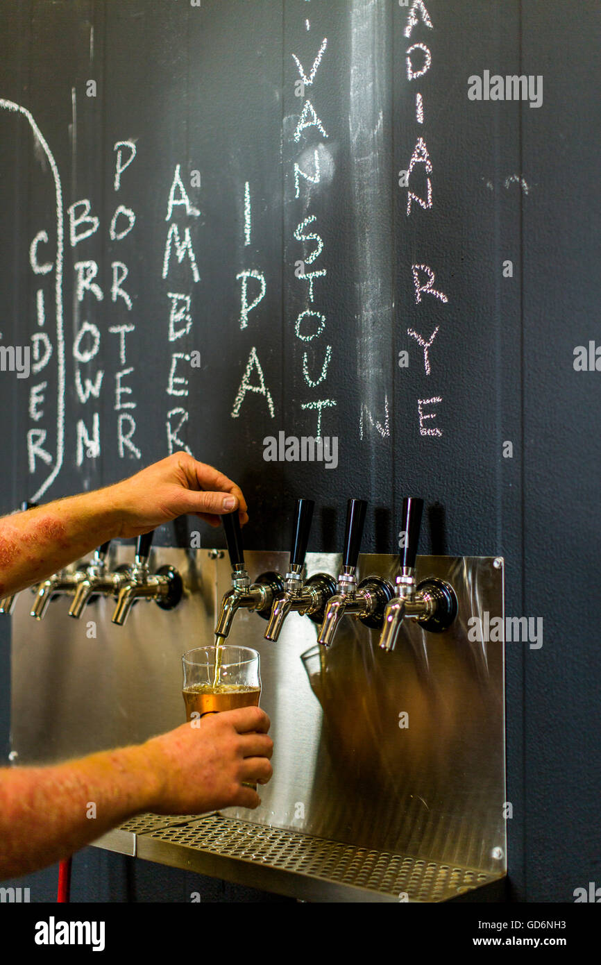 A man fills a pint of beer at a brewery in Enumclaw, Washington, USA. - Stock Image