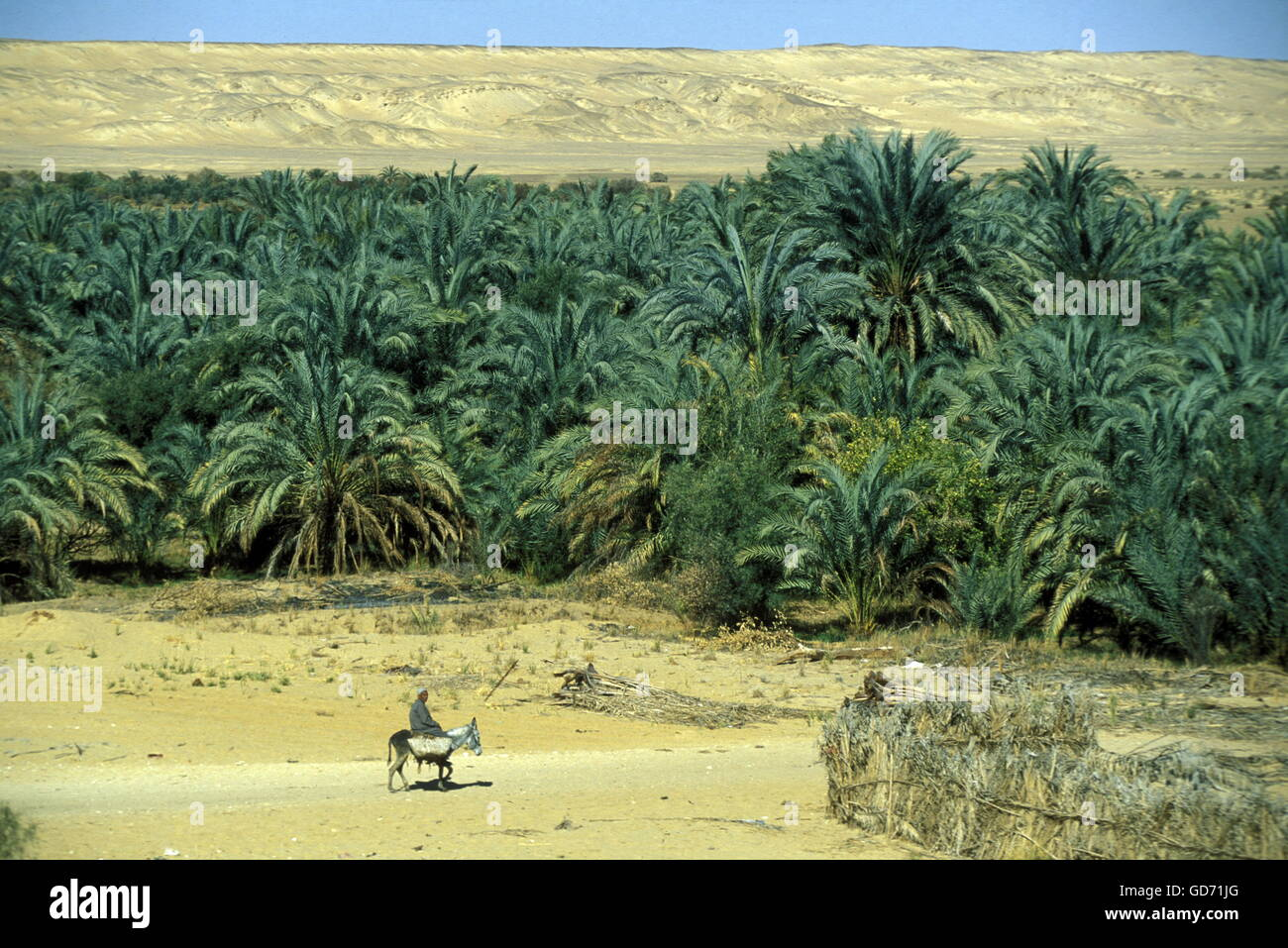 the Landscape and nature of the Oasis and village of Siwa in the lybian or western desert of Egypt in north africa - Stock Image