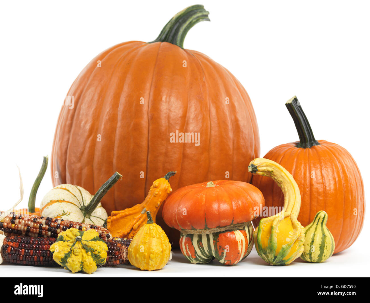 Pumpkins and gourds - Stock Image