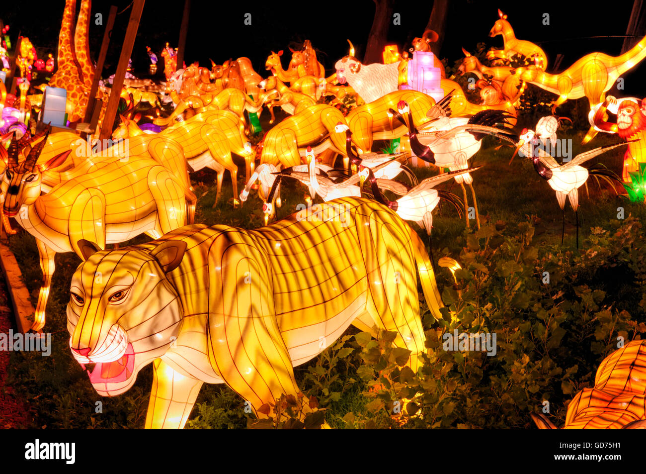 Group of different animals, illumination at the Chinese Lantern Festival, at night, Ontario Place, Toronto, Ontario, - Stock Image