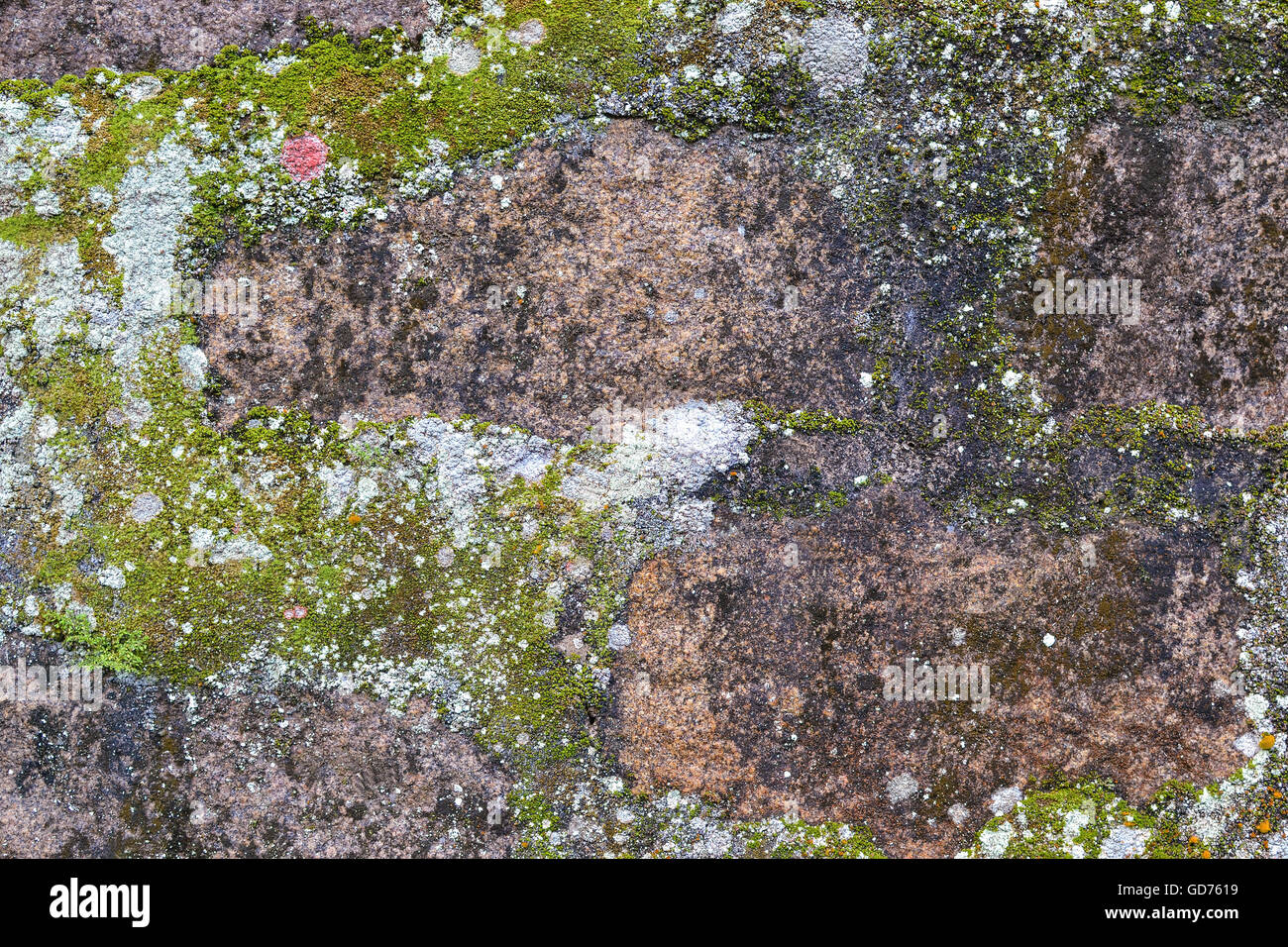 Rock, mold, moss and liken background and texture - Stock Image