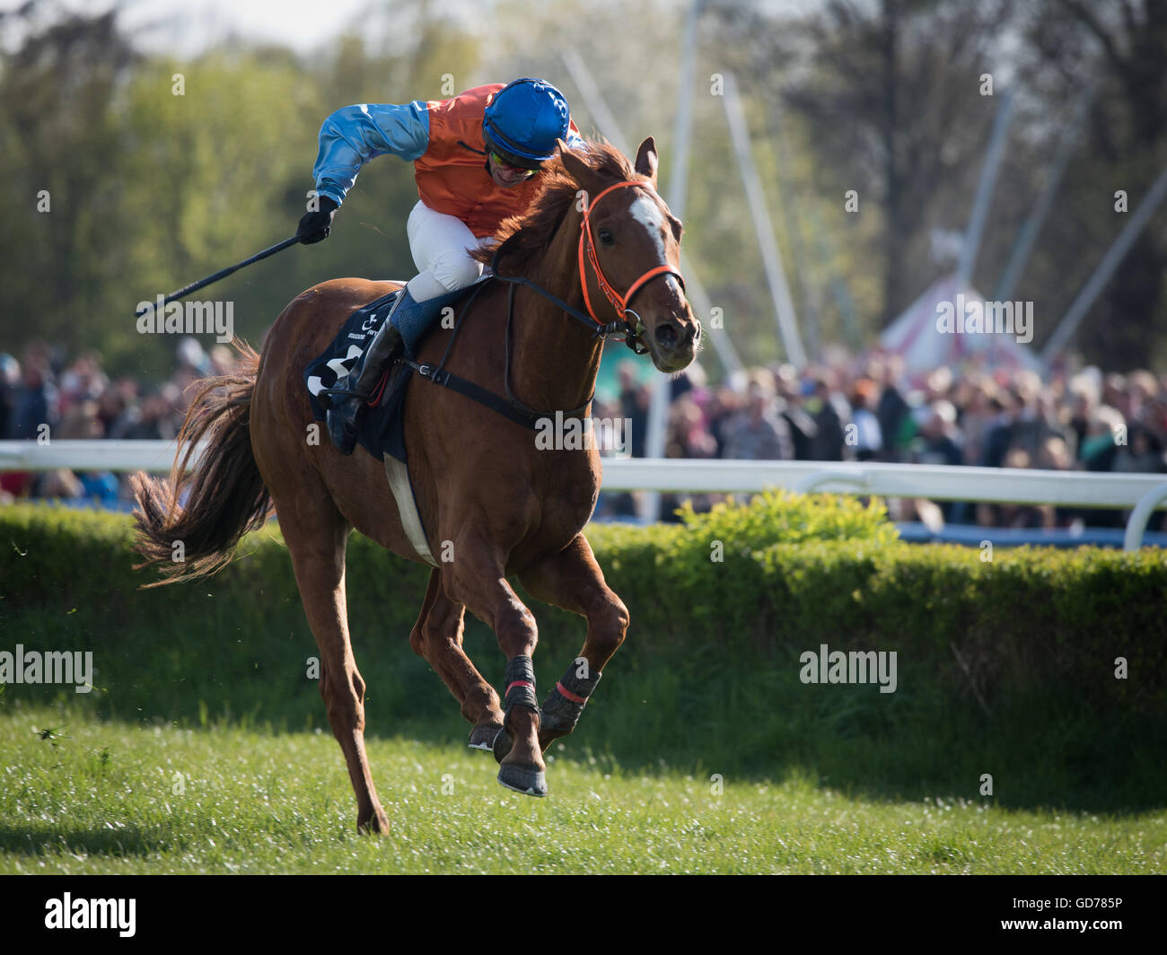 WROCLAW, POLAND - APRIL 24; 2016: International steeplechase for 4-year old horses. In action jockey M. Novak on Stock Photo