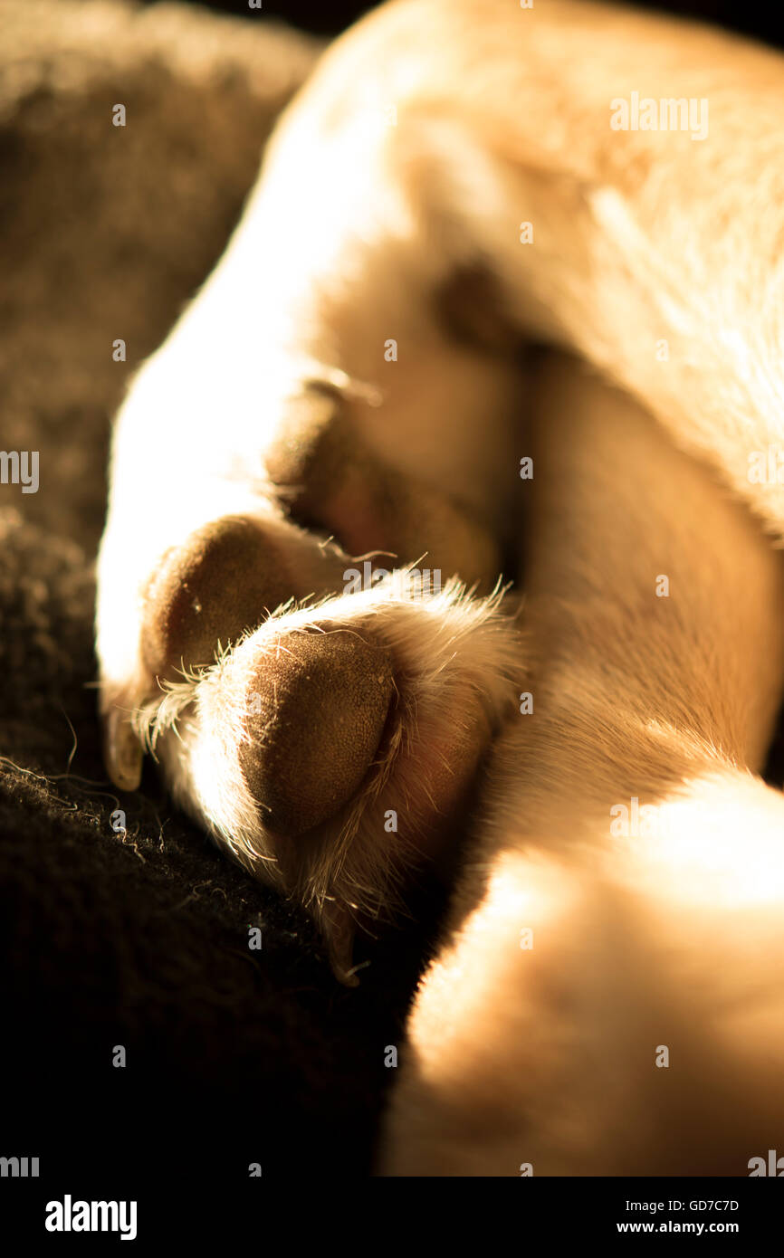 close-up of dog's paws and legs - Stock Image