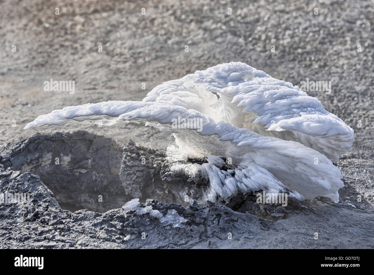 Ice feathers created by hot steam coming from a volcanic vent, Hverir, Iceland - Stock Image