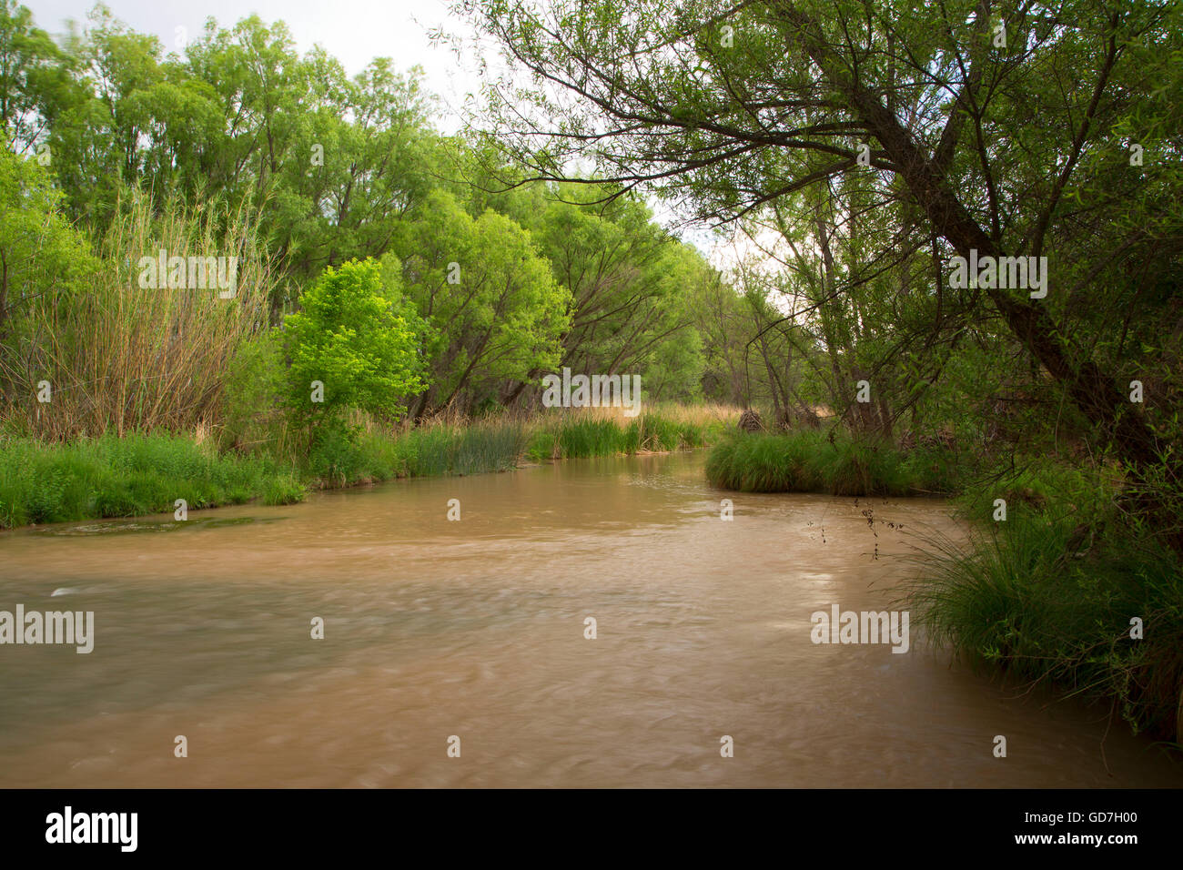 Verde River at Black Canyon Day-Use, Prescott National Forest, Arizona - Stock Image