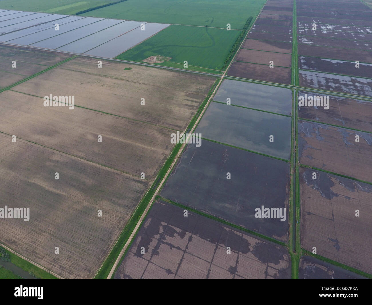 Flooded rice paddies. Agronomic methods of growing rice in the fields. Flooding the fields with water in which rice - Stock Image