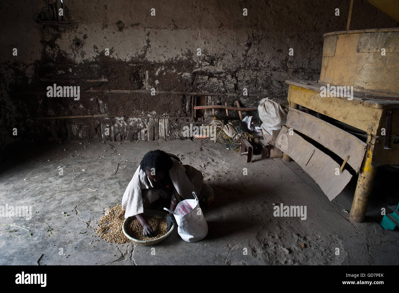 Woman sorting grains in a mill ( Ethiopia) - Stock Image