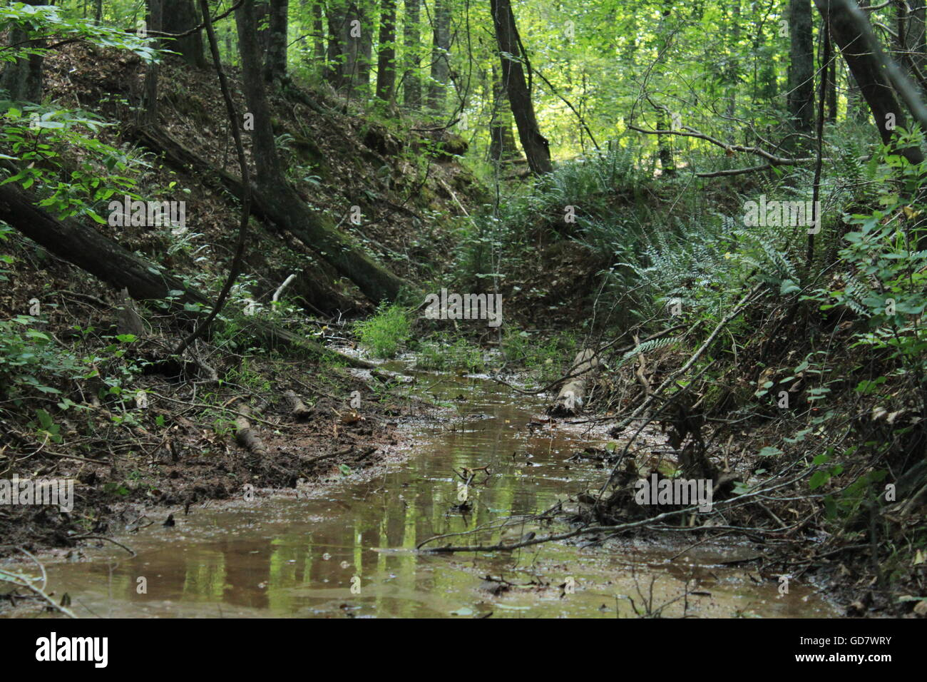 A  murky creek in the woods of central Georgia - Stock Image
