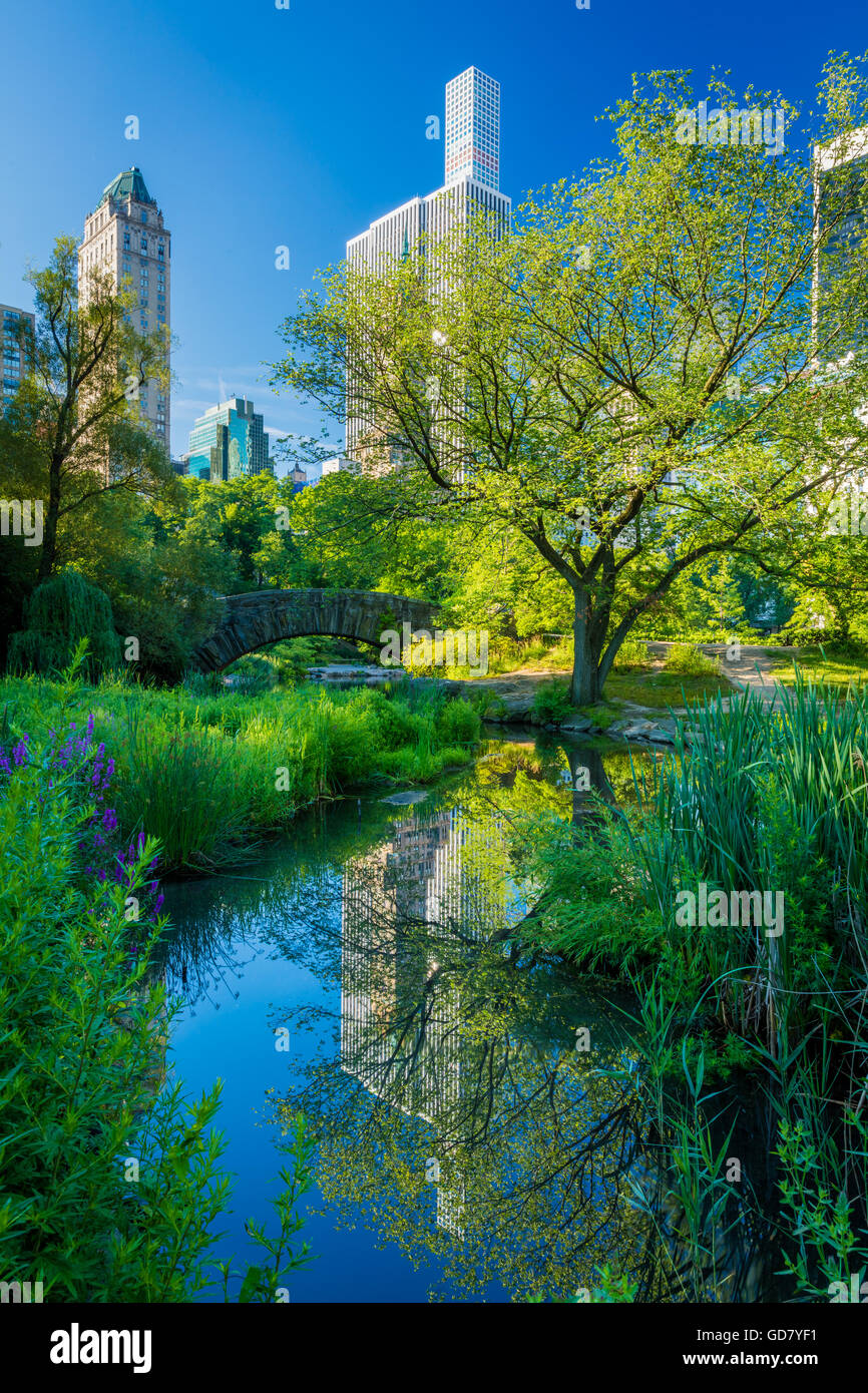 The Pond in Central Park, New York City, with midtown buildings visible in the distance - Stock Image