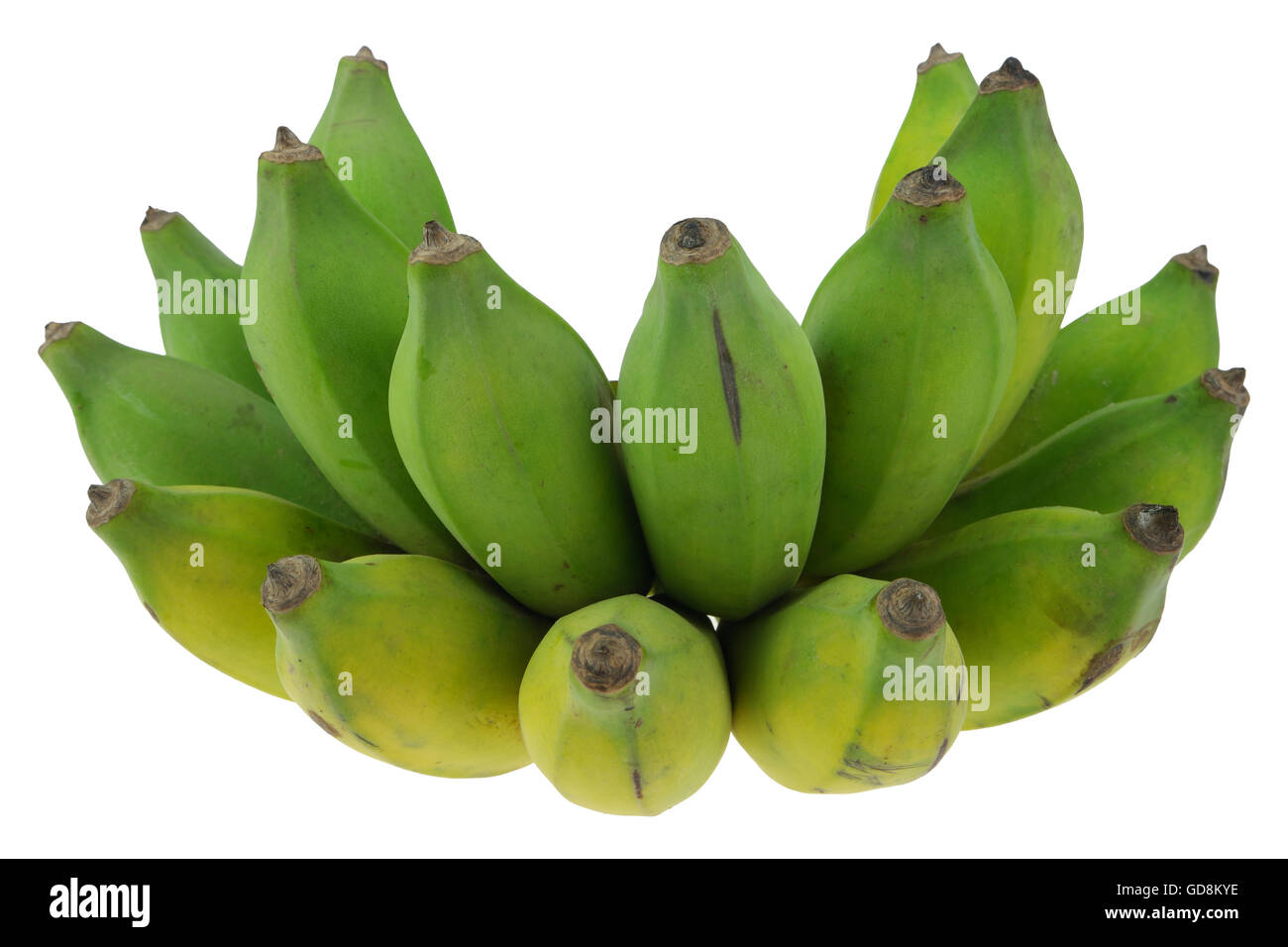 Cultivated banana on isolate white background. Stock Photo