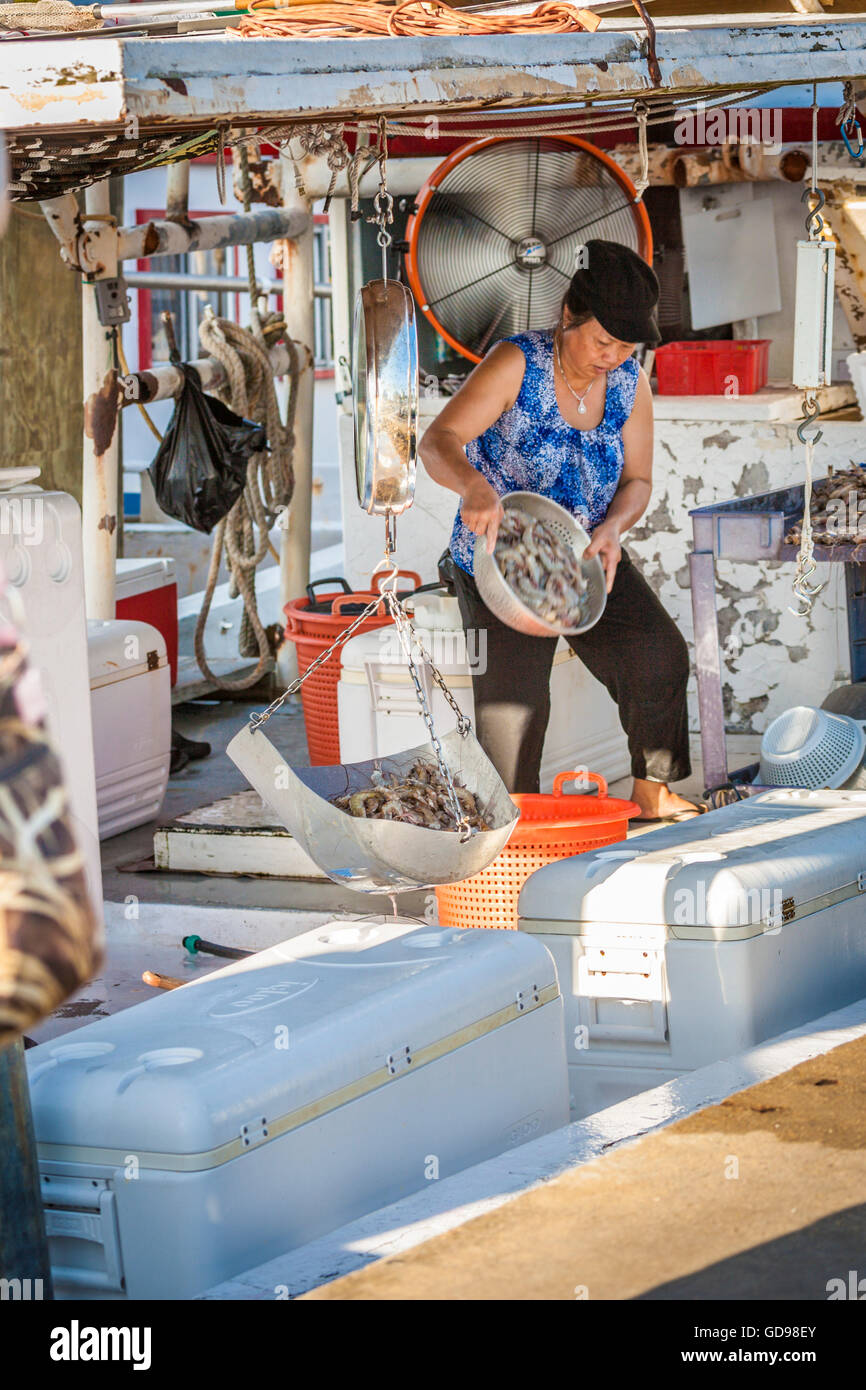 Vietnamese woman weighing and selling shrimp direct from the boat at the commercial harbor in Biloxi, Mississippi - Stock Image