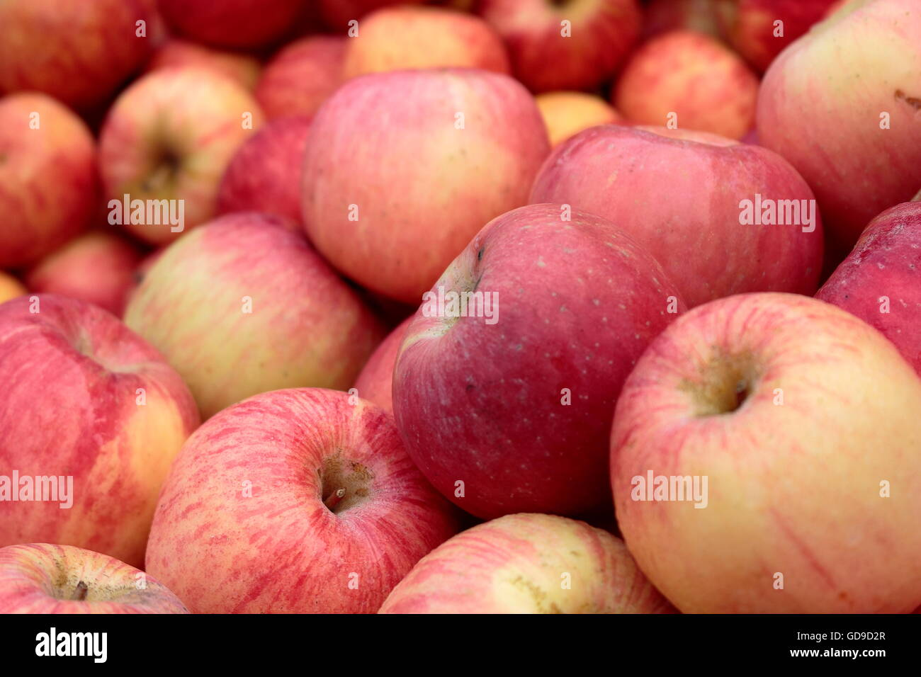 wallpaper of red apples stock photo: 111460575 - alamy