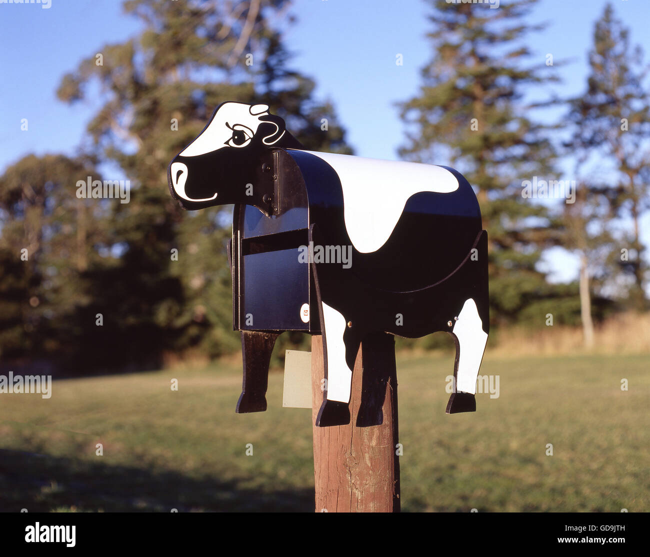Cow novelty letter box at farm gate, Rakaia, Canterbury, South Island, New Zealand - Stock Image
