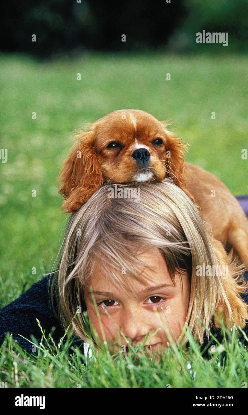 Children Cavalier King Charles Spaniel Stock Photos   Children ... c04e95f668