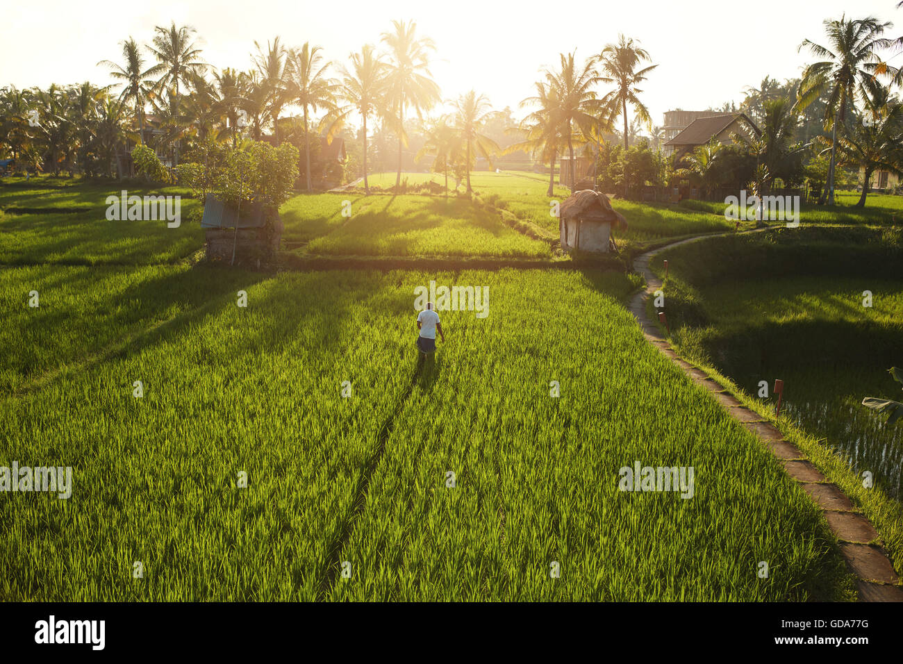 Beautiful view of farm lands with trees on a bright sunny day - Stock Image