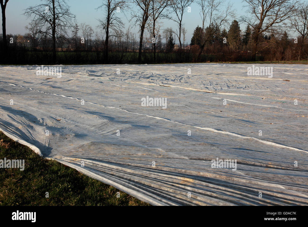Plastic sheeting over fields in Therwil, Basel, Switzerland - Stock Image