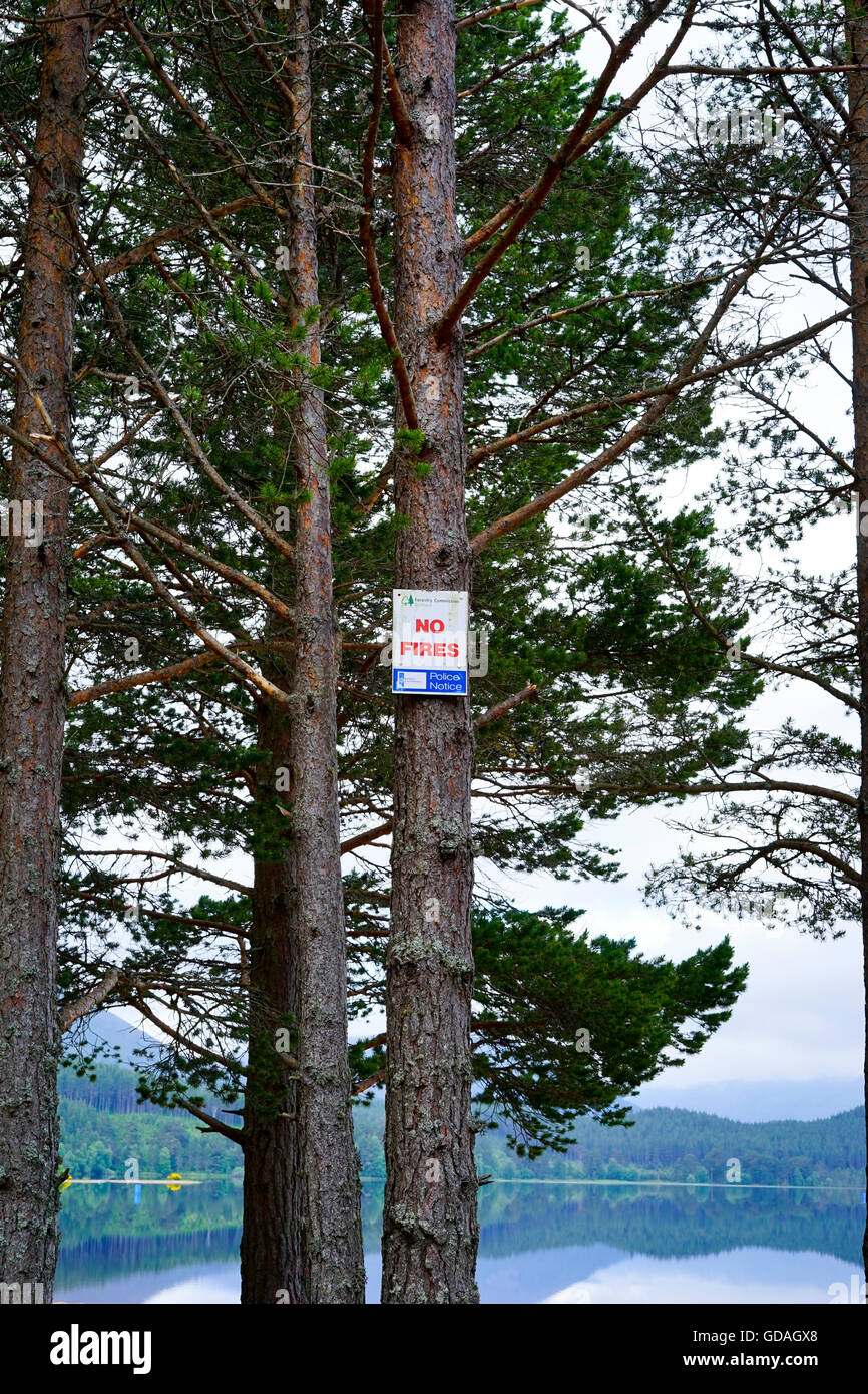 Fire warning sign on pine tree, Loch Morlic,Glen More,Aviemore,Scotland,UK. - Stock Image