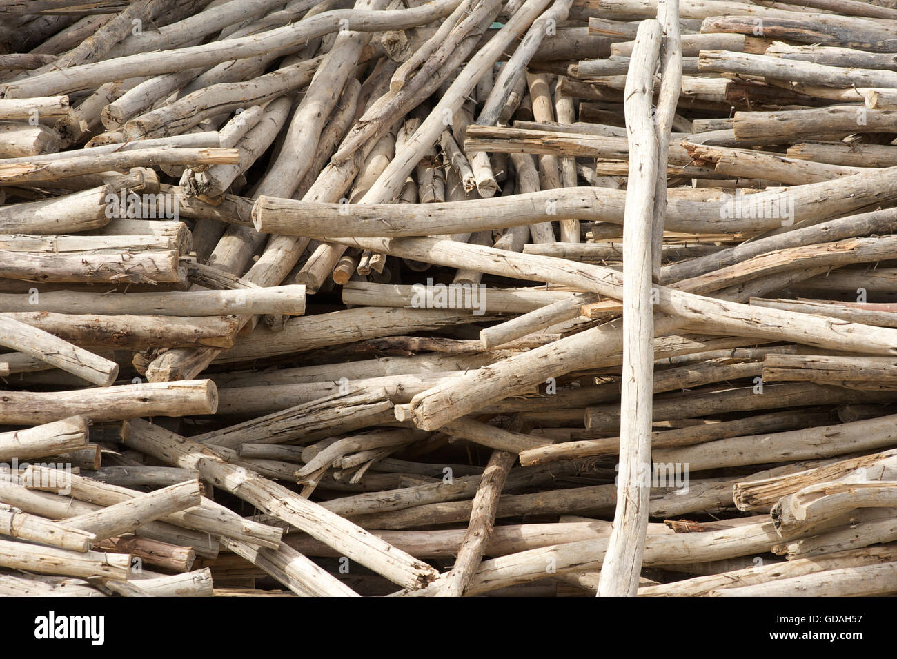 Stacks of wooden poles. Axum, Tigray, Ethiopia - Stock Image