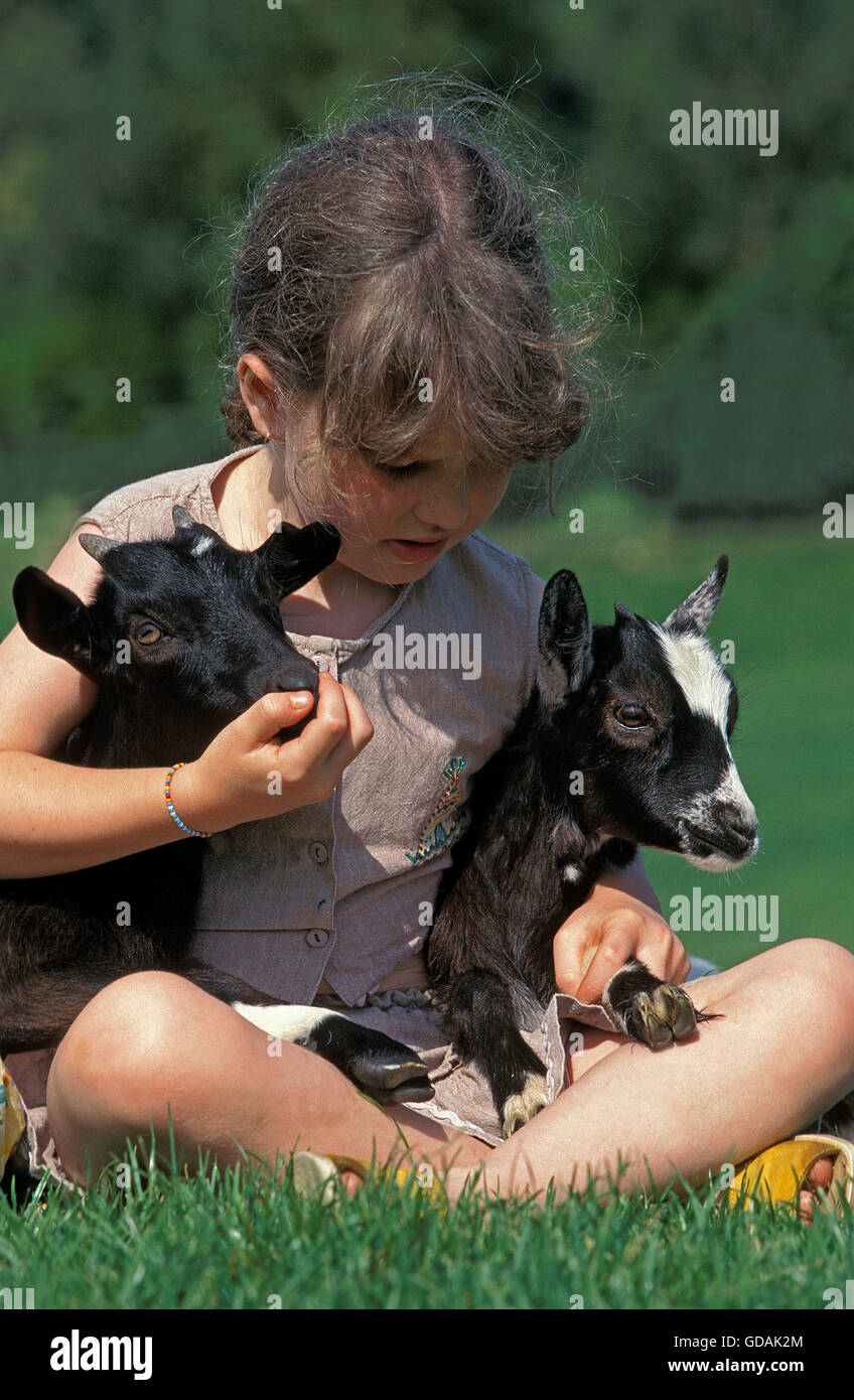 GIRL WITH PYGMY GOATS - Stock Image