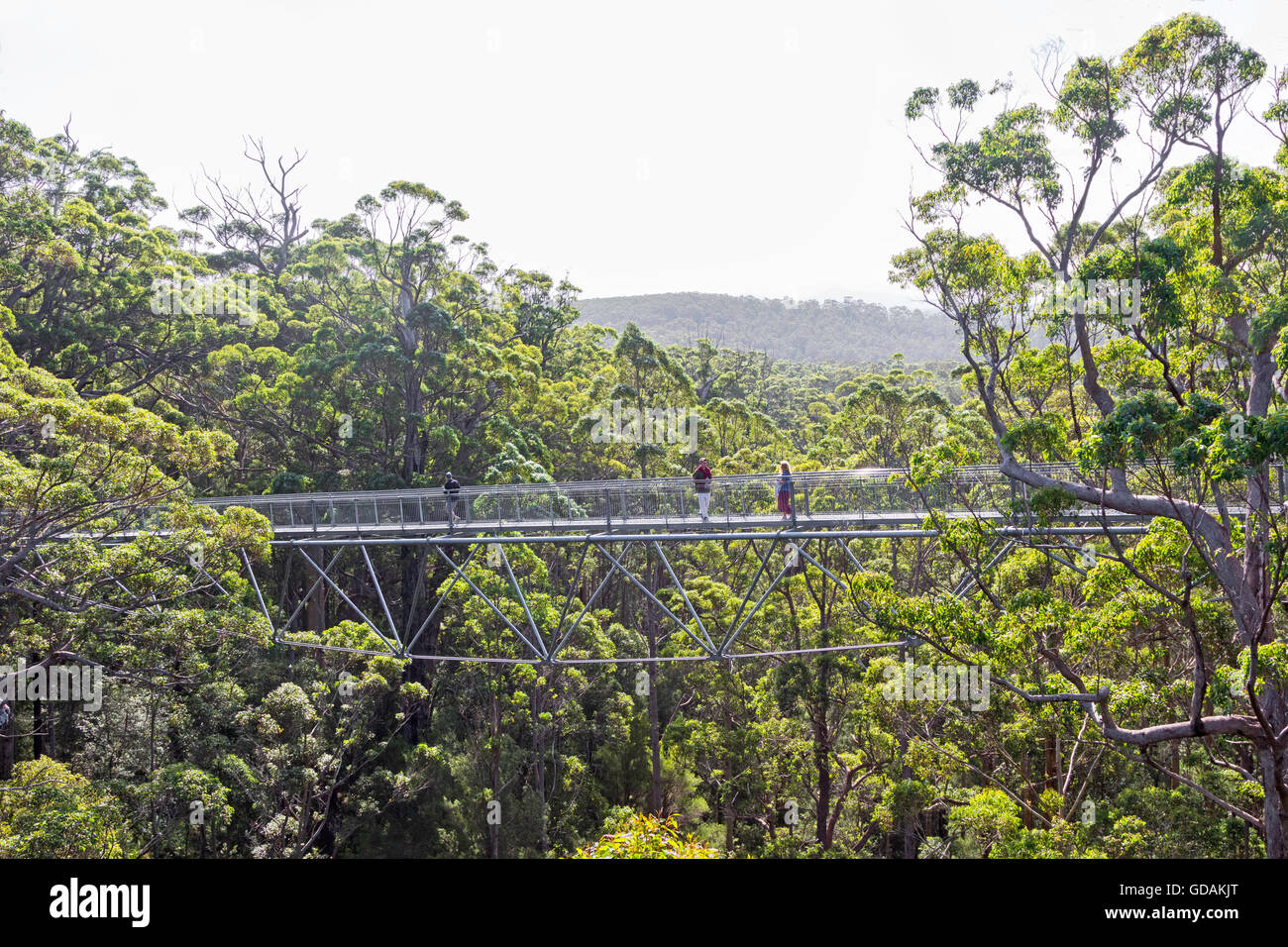 Walpole, Australia, April 2, 2016: Tourists enjoying the Tree Top Walk in the Valley of the Giants in Western Australia. - Stock Image