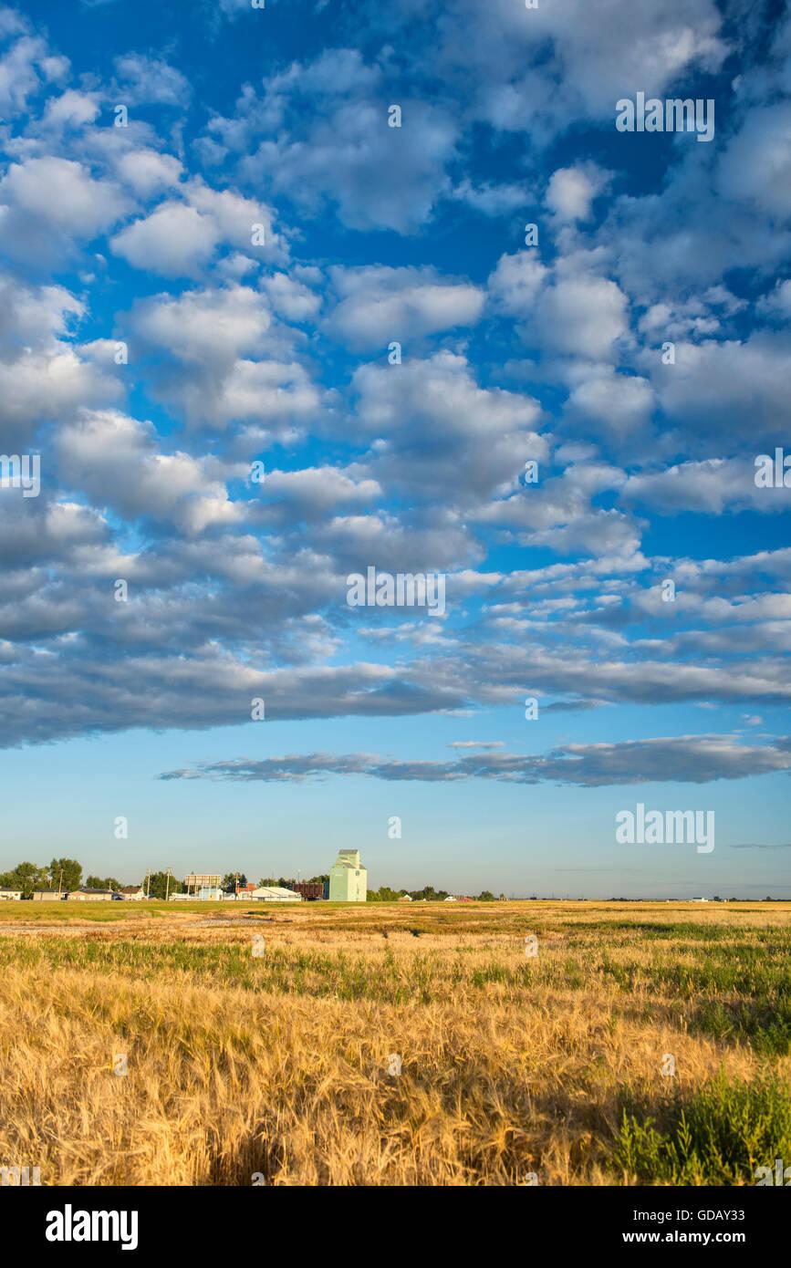 Prairie - Stock Image