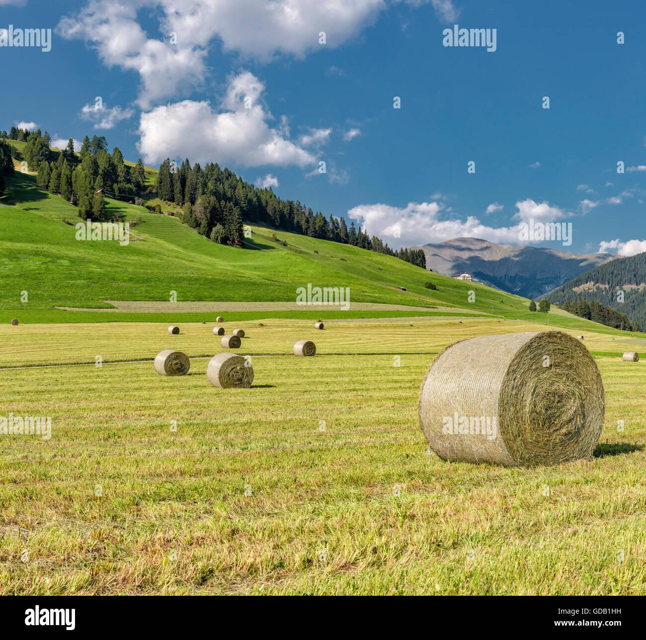 Toblach,Dobbiaco,Italia,Straw bales at a field - Stock Image