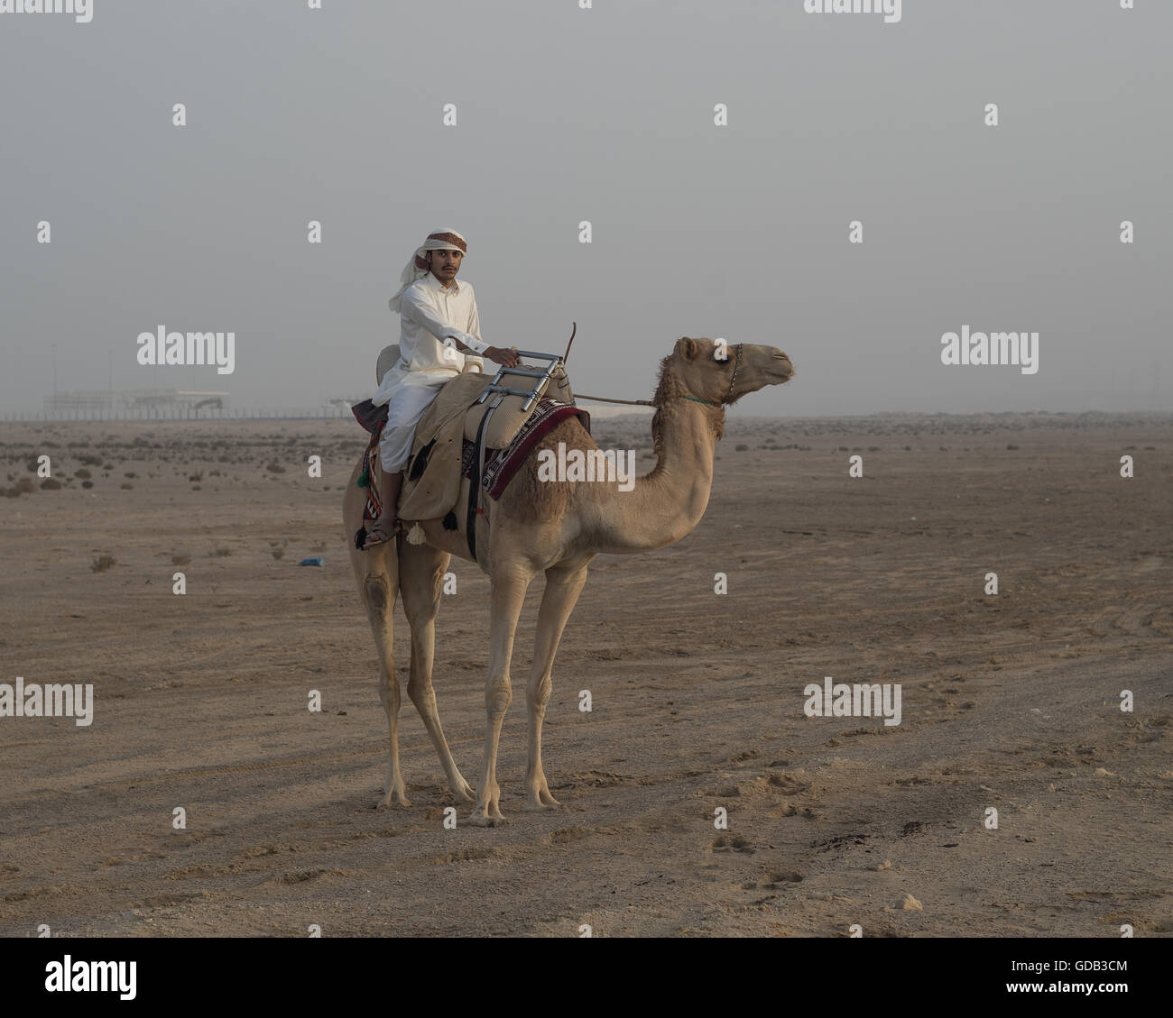 An Arab man mounted on a camel prepares for the day's hunt during the Al Galayel Hunting Festival in Qatar. - Stock Image